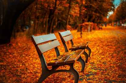 autumn avenue bench fall